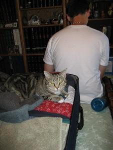 kitty-suitcase